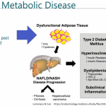 Type 2 Diabetes: Beyond Remission to a Cure - Macro Four