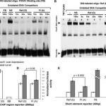 Association of Levels of Fasting Glucose and Insulin With Rare Variants at  the Chromosome 11p11.2-MADD Locus   Circulation: Cardiovascular Genetics