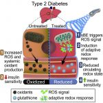 Electromagnetic Fields Can Treat Type 2 Diabetes – News & Views