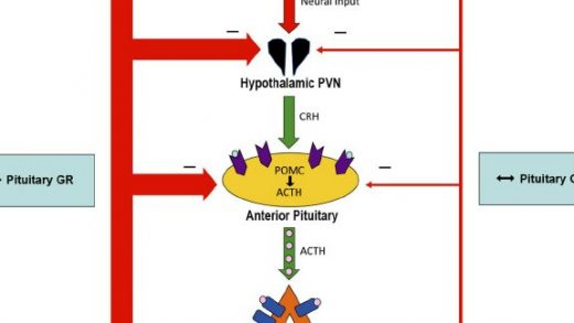 Summary of the effects of type 2 diabetes and exercise on the... | Download  Scientific Diagram