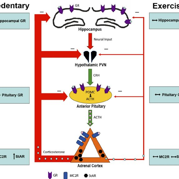 Summary of the effects of type 2 diabetes and exercise on the...   Download  Scientific Diagram
