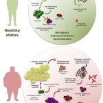 Frontiers   Type 2 Diabetes: How Much of an Autoimmune Disease?    Endocrinology