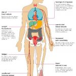 What Organs Does Type 2 Diabetes Affect