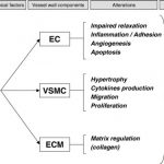 Mechanisms of target organ damage caused by hypertension: Therapeutic  potential - ScienceDirect