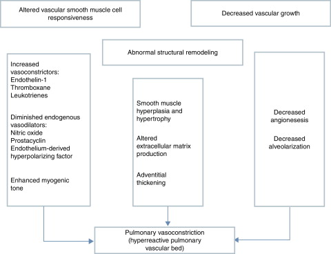 Pathophysiology of pulmonary hypertension in newborns: Therapeutic  indications - ScienceDirect