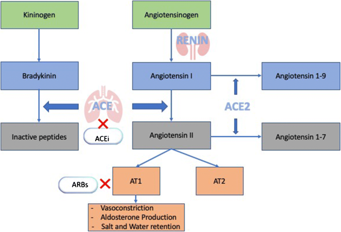 Should Angiotensin-Converting Enzyme Inhibitors ever Be Used for the  Management of Hypertension? | SpringerLink