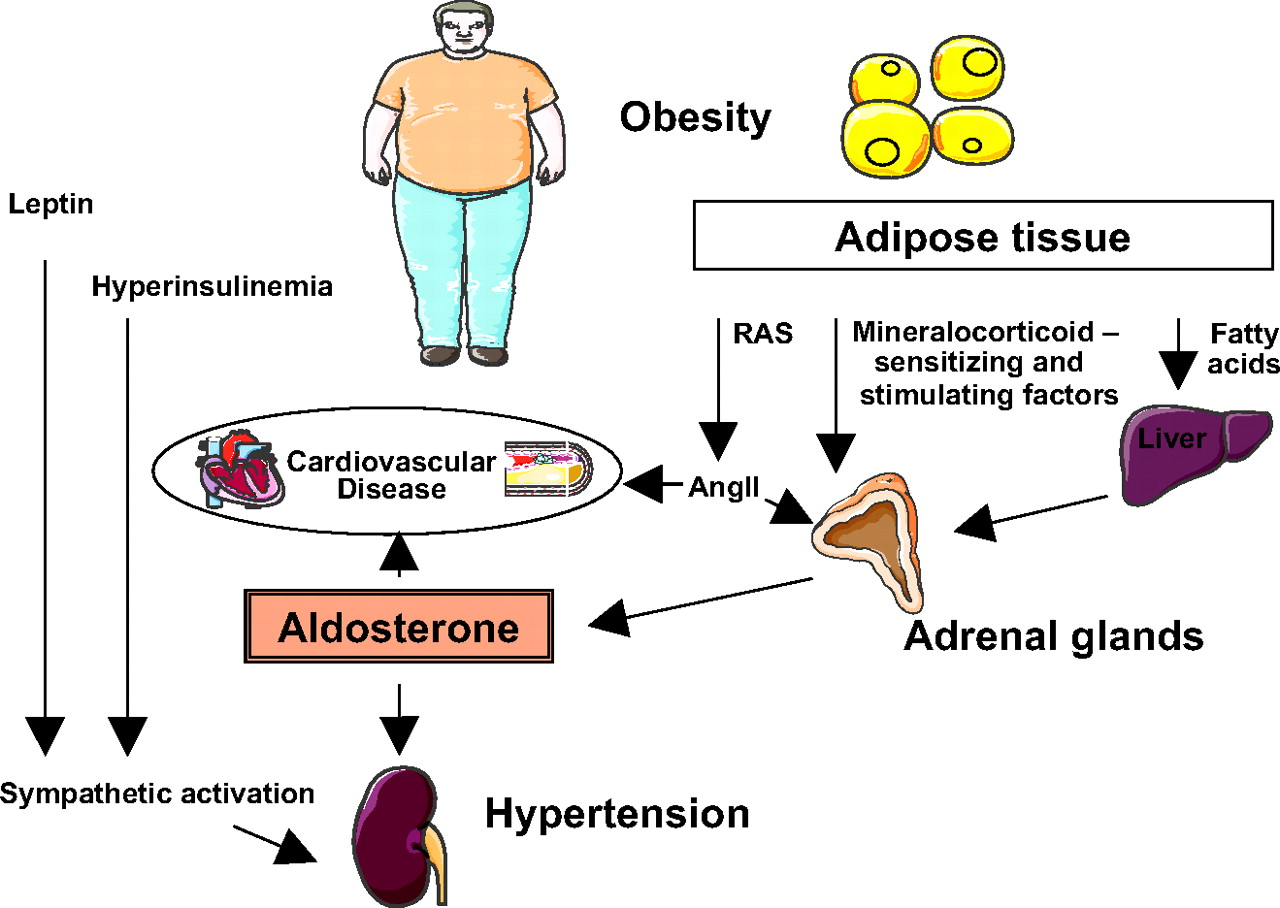 Aldosterone and Metabolic Syndrome | Hypertension
