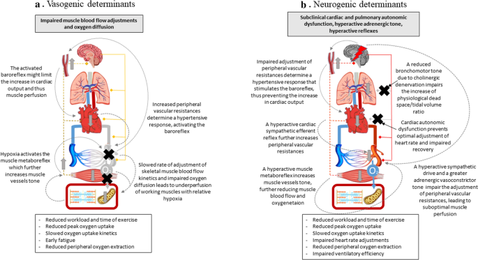 Type 2 diabetes and reduced exercise tolerance: a review of the literature  through an integrated physiology approach | Cardiovascular Diabetology |  Full Text