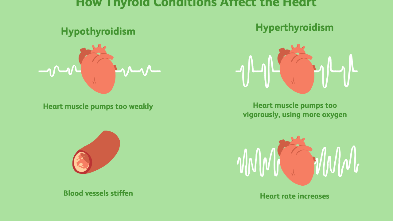 How Does Thyroid Disease Affect the Heart?