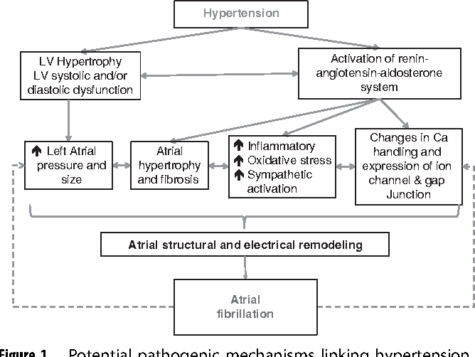 Figure 1 from Hypertension and atrial fibrillation: epidemiology,  pathophysiology and therapeutic implications | Semantic Scholar
