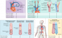 Device-based therapies for arterial hypertension.,Nature Reviews Cardiology  - X-MOL