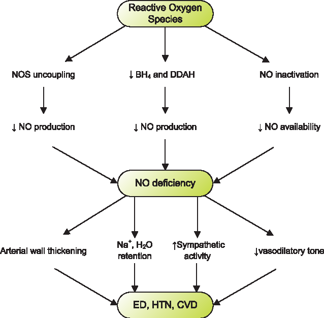 Figure 2 from Causal link between oxidative stress, inflammation, and  hypertension. | Semantic Scholar