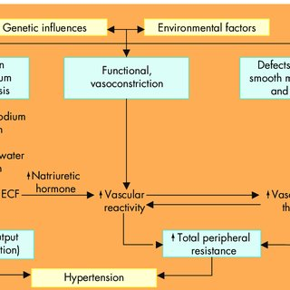 The pathophysiology of primary hypertension. A hypothetical scheme for...    Download Scientific Diagram