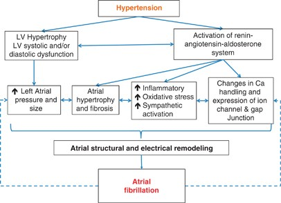 Hypertension and atrial fibrillation: epidemiology, pathophysiology and  therapeutic implications   Journal of Human Hypertension