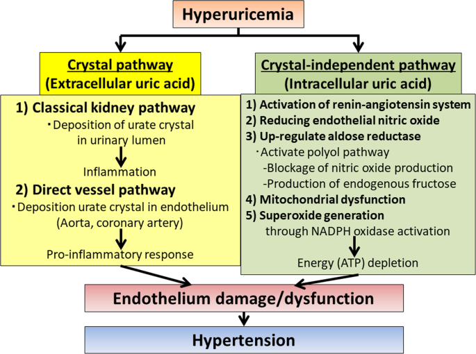 Uric acid and hypertension | Hypertension Research