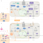 The integrative biology of type 2 diabetes   Nature