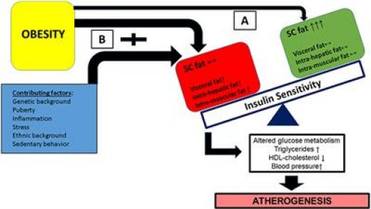 Frontiers | Obesity as the Main Risk Factor for Metabolic Syndrome in  Children | Endocrinology