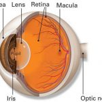 Ocular Hypertension Causes - American Academy of Ophthalmology