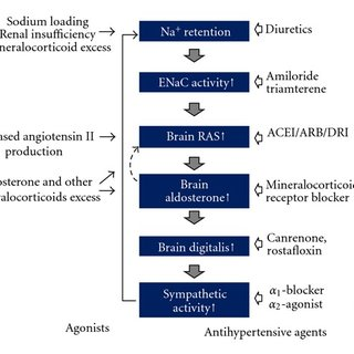 A supposed cascade of genesis of hypertension and acting sites of... |  Download Scientific Diagram