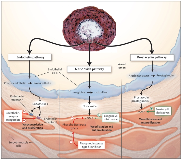 Cellular mechanisms of sildenafil actions. Reproduced with permission... |  Download Scientific Diagram