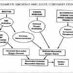 Diagram of the pathophysiological effects of cigarette smoking. The... |  Download Scientific Diagram