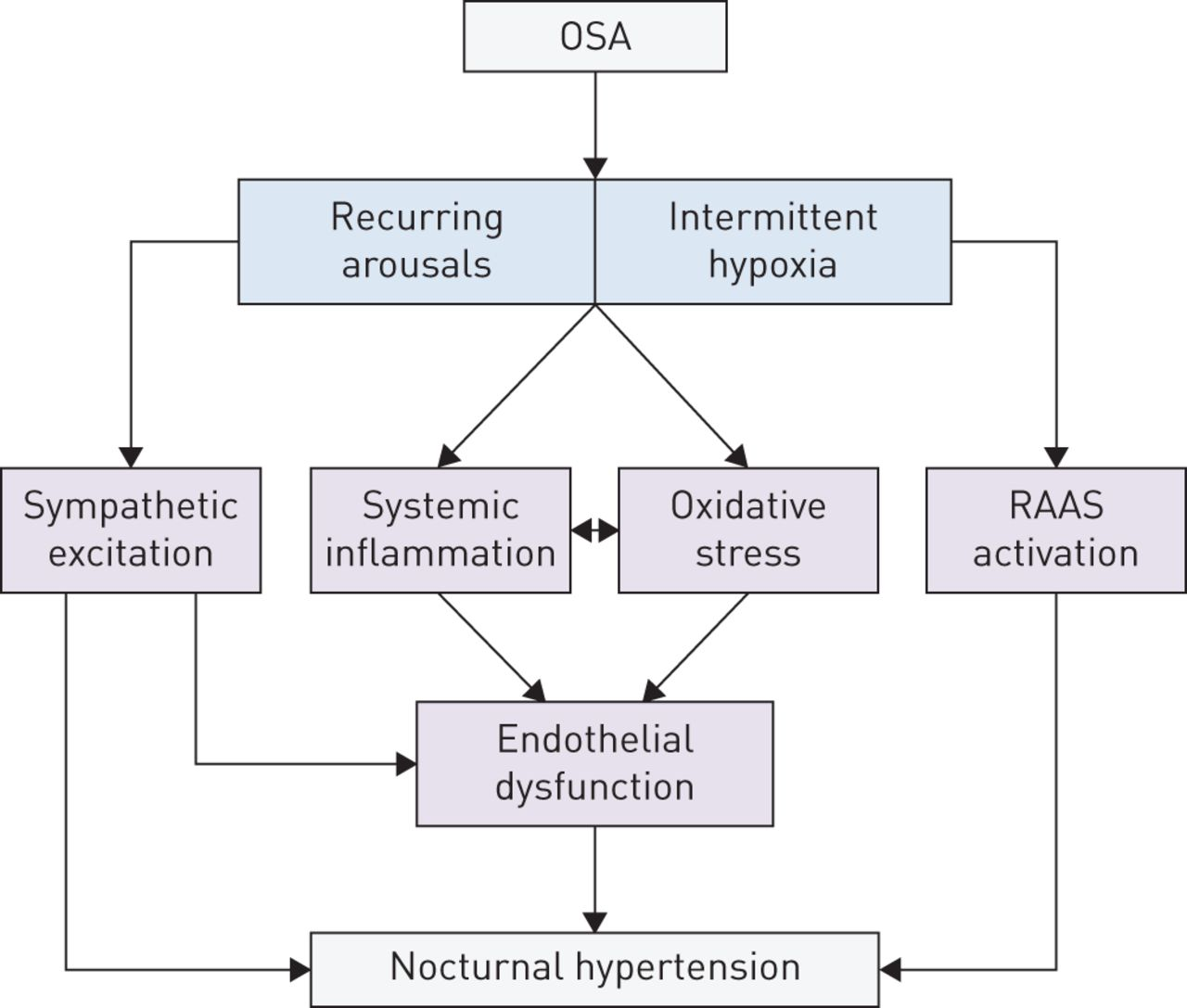 Obstructive sleep apnoea as a cause of nocturnal nondipping blood pressure:  recent evidence regarding clinical importance and underlying mechanisms    European Respiratory Society