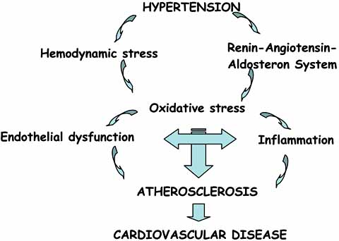 Mechanisms involved in the link between hypertension and... | Download  Scientific Diagram