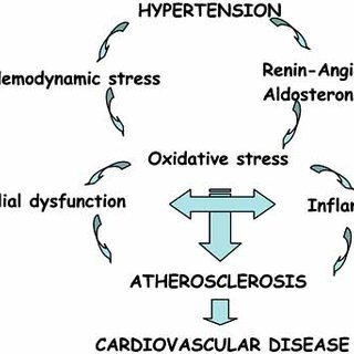 PDF) Inflammation: A Link Between Hypertension and Atherosclerosis