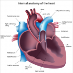 What Does the Pulmonary Artery Pressure Really Tell Us?