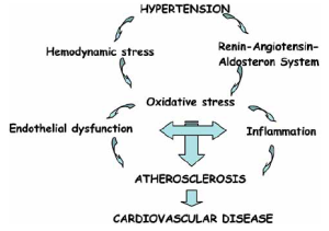 Review: Hypertension and the Pathogenesis of Atherosclerosis
