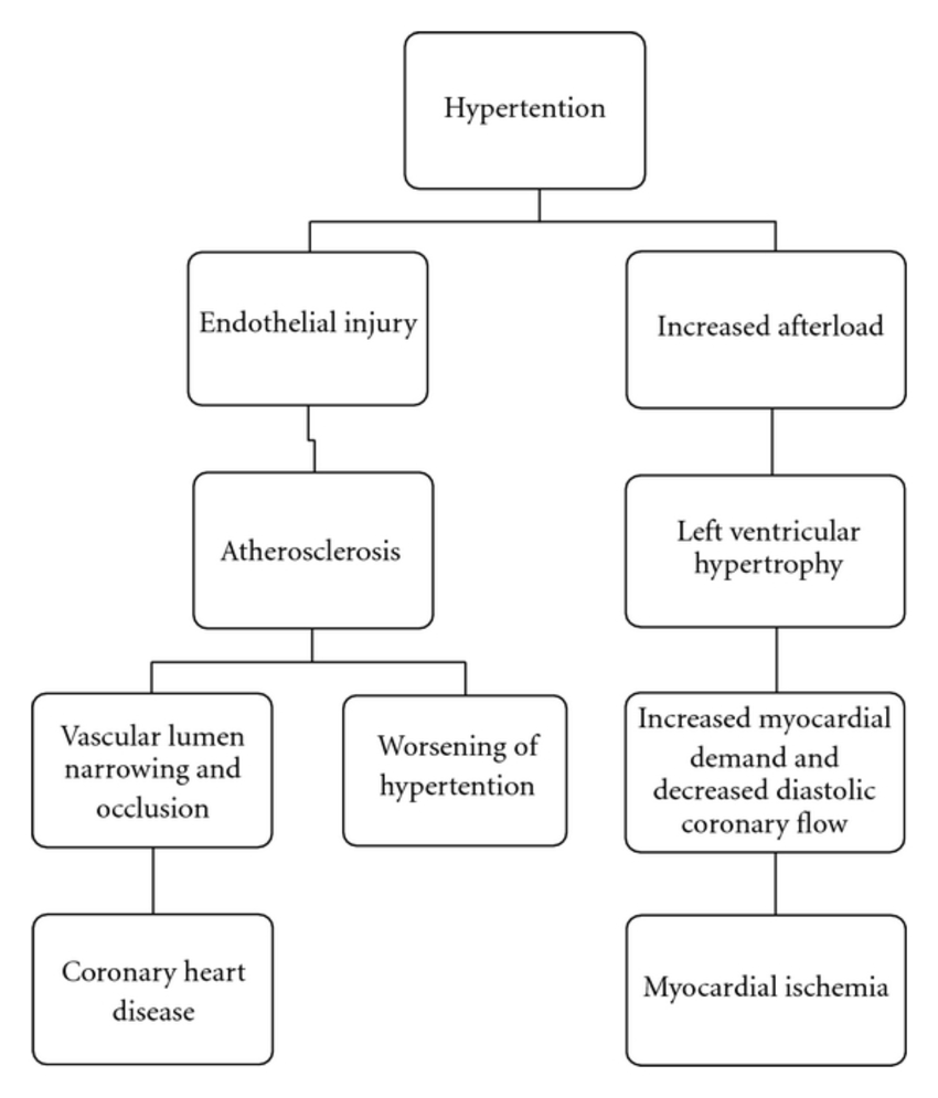 Pathophysiological link between hypertension and coronary heart disease.    Download Scientific Diagram