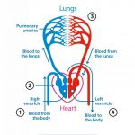 What is pulmonary hypertension?   British Lung Foundation