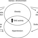 Obesity-related hypertension: possible pathophysiological mechanisms in:  Journal of Endocrinology Volume 223 Issue 3 (2014)