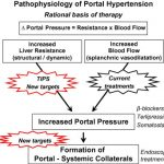 Rationale basis for the treatment of portal hypertension. While current...    Download Scientific Diagram