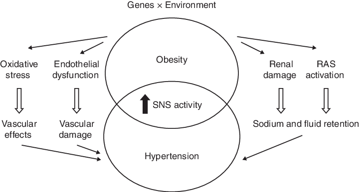 Relation between obesity and hypertension as well as particular... |  Download Scientific Diagram