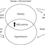 PDF) Obesity-related hypertension: Possible pathophysiological mechanisms