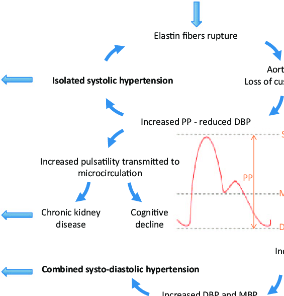 Role of isolated systolic hypertension in the pathogenesis of resistant...  | Download Scientific Diagram