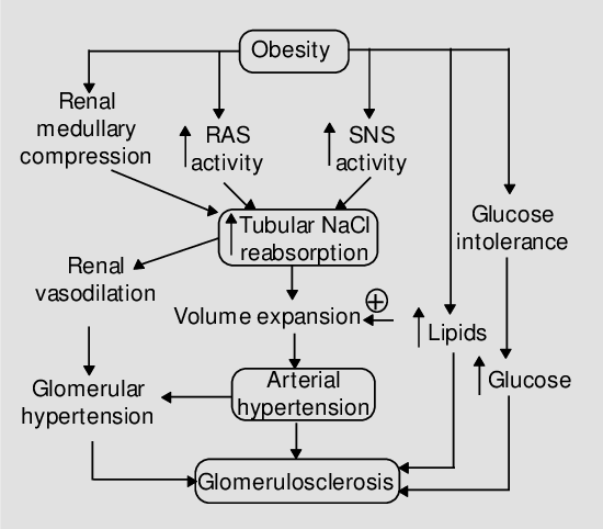 Summary of mechanisms by which obesity may cause hypertension and... |  Download Scientific Diagram
