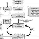 Summary of potential mechanisms by which obesity causes hypertension... |  Download Scientific Diagram