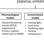 Animal models for the study of primary and secondary hypertension in humans  (Review)