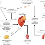 Obesity and Cardiovascular Disease: A Scientific Statement From the  American Heart Association | Circulation