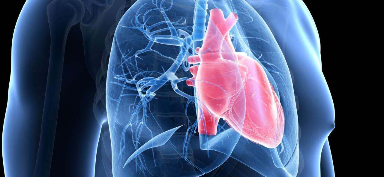 5 Things We Now Know About Pulmonary Arterial Hypertension | Johnson &  Johnson