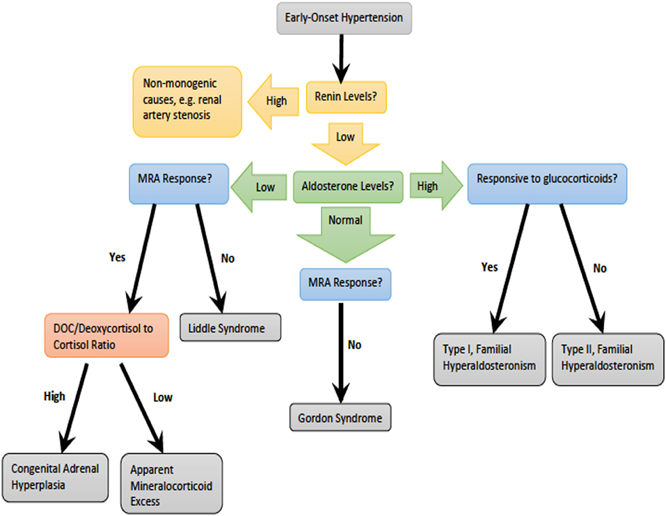 Frontiers | Overview of Monogenic or Mendelian Forms of Hypertension |  Pediatrics