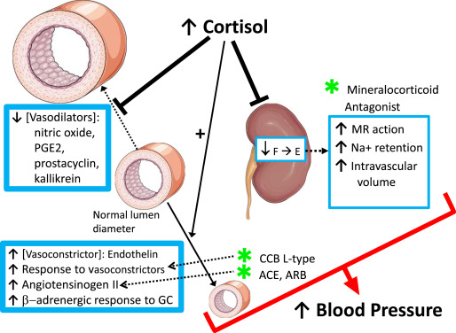Hypertension and Cardiovascular Mortality in Patients with Cushing Syndrome  - Endocrinology and Metabolism Clinics