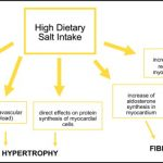 Salt and Hypertension: Is Salt Dietary Reduction Worth the Effort? - The  American Journal of Medicine