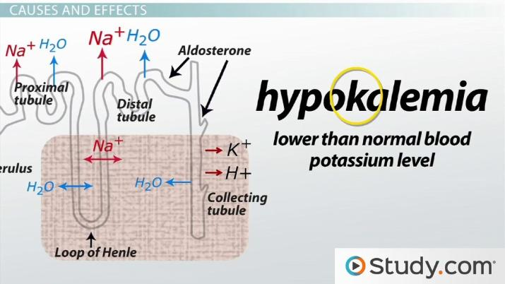 Why would prolonged elevations of blood aldosterone produce hypertension? |  Study.com