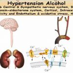 Alcohol Hypertension; Alcohol in Moderation Lower Your Blood Pressure