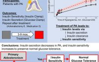 Primary Aldosteronism Decreases Insulin Secretion and Increases Insulin  Clearance in Humans | Hypertension