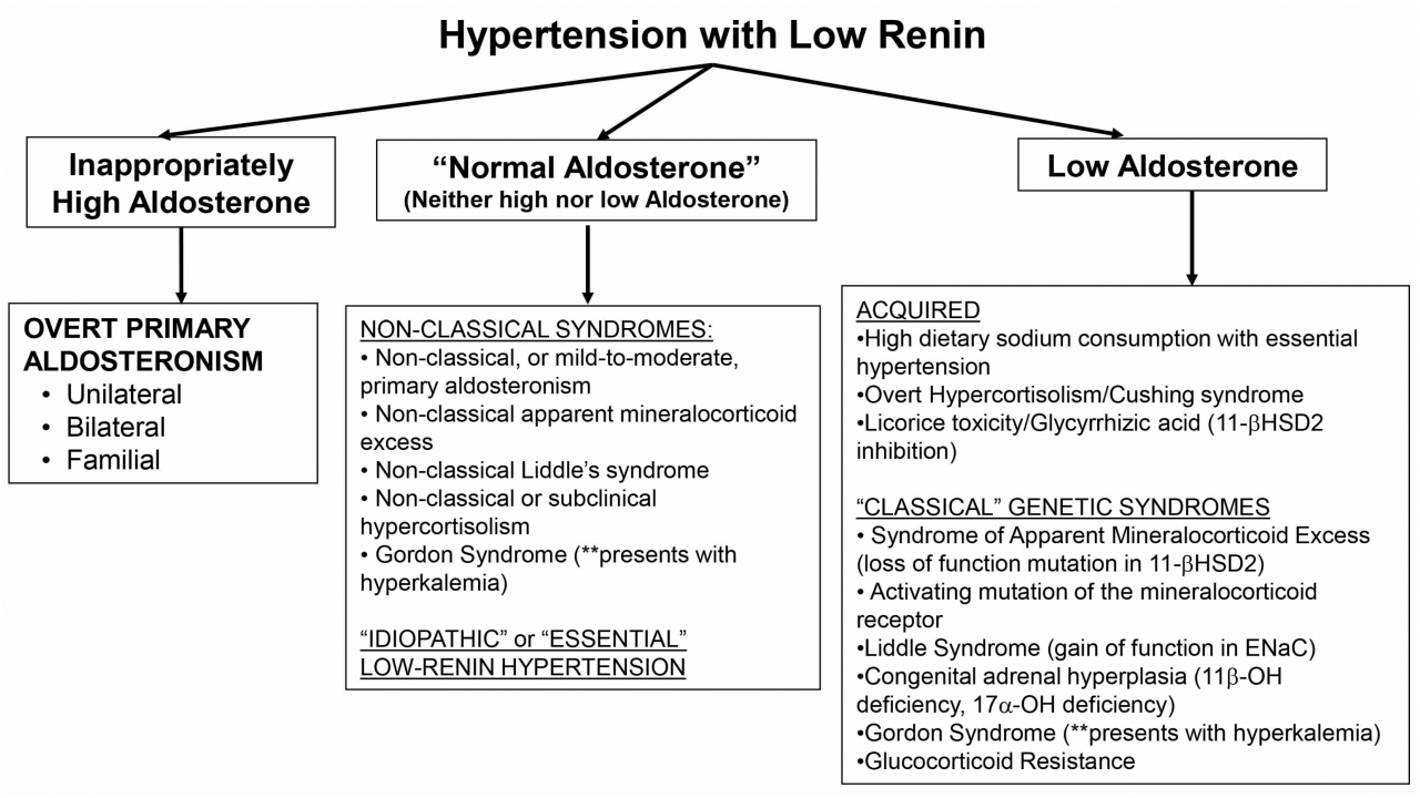 IJMS | Free Full-Text | The Low-Renin Hypertension Phenotype: Genetics and  the Role of the Mineralocorticoid Receptor | HTML