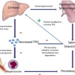 Pathogenesis of Thrombocytopenia in Chronic HCV Infection: A Review